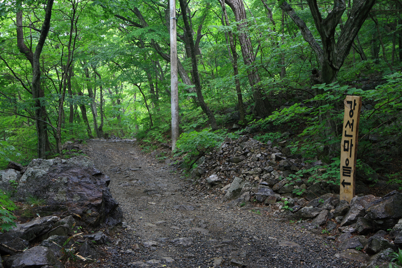 이정표_강선마을을 알리는 이정표와 흙길. 길을 감싼 활엽수가 워낙 깊어 온몸에 푸른 물이 들 것 같다.